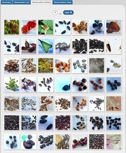 Talbot - seeds project 2 250.jpg