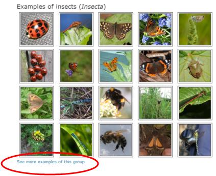 SpeciesSurfer2.png