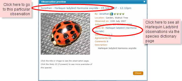 SpeciesSurfer3.png