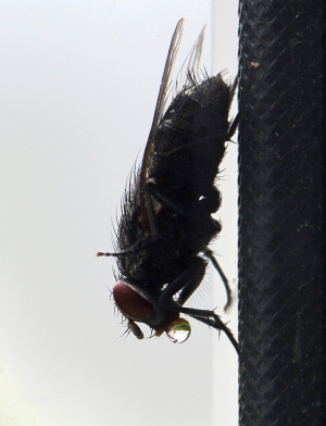 Strange fly behaviour