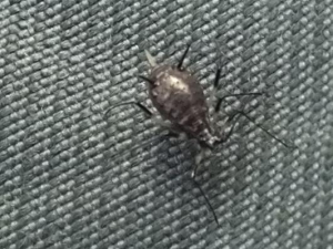 unidentified bug