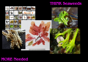 THINK SEAWEEDS PLEASE