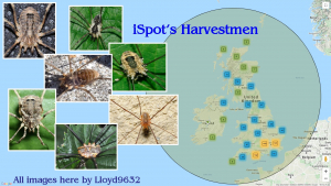 ✳️iSPOTLIGHT✳️ Harvestmen