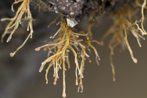 Possibly hydroids?