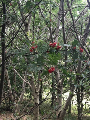 Woodland berries