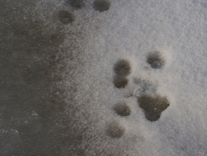 Footprints In The Snow!!