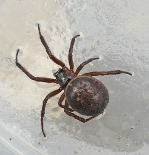 What spider is this?