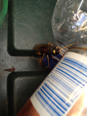 Giant insect in the recycling!