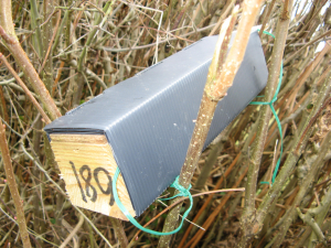 Boxes in Hedgerow