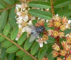 20110531_25 cropped fly