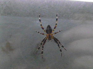 DSCF9851 spider on the back door