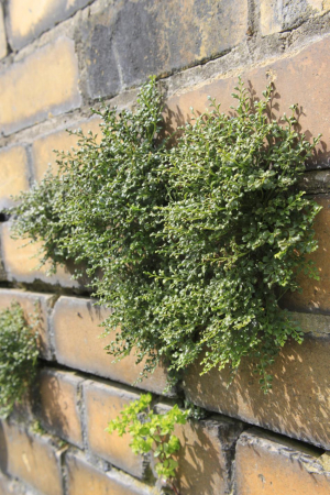 Plant growing in wall