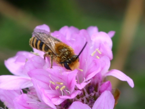 Hoverfly on Thrift