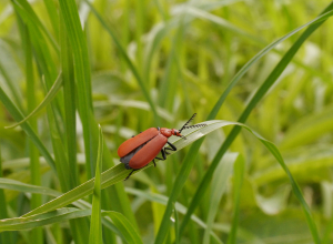 Insect at Tickenham Hill Nature Reserve