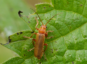 Insect at Clapton Moor Nature Reserve