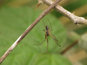Spiders at Portbury Wharf Nature Reserve