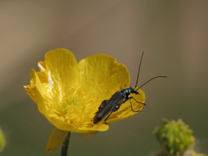 Insects at Portbury Wharf Nature Reserve