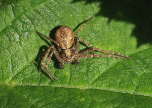 spider at Portbury Wharf Nature Reserve
