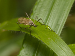 Insect at Taggart's Wood