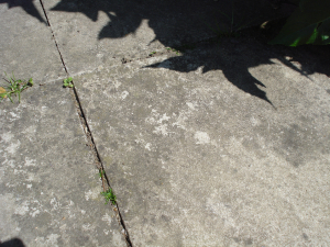 Lichen on Patio