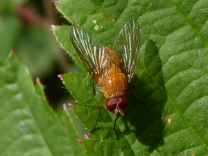 Orange Fly for ID if pos. Please