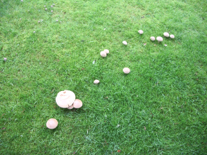Part of Fairy Ring for ID