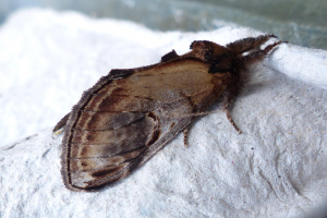 14-08-04 005 Pebble Prominent