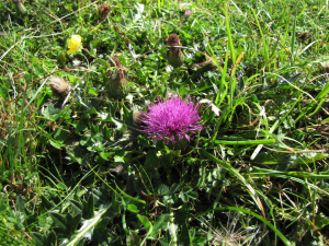 Plant from Minchinhampton Common