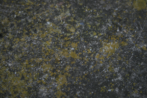 Concrete paving stone covered in crustose lichens
