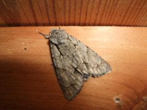 moth in shed