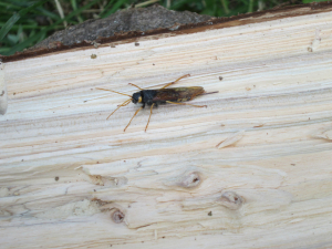 Insect emerged from conifer log
