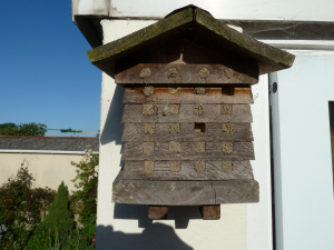 INSECT BOX