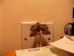 When we went to bed last night,this moth was on the light switch