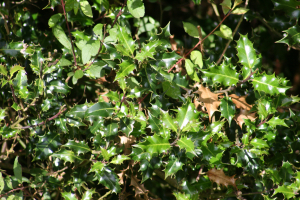Holly IMG_1078