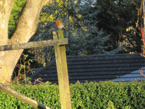 Robin on a goal post
