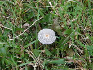 Pleated incap