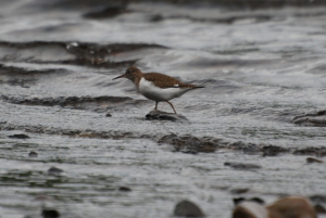 Unknown Wader - can anyone help?