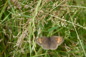 Butterfly ~~ out of focus