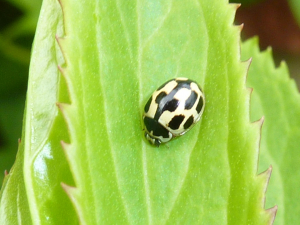 Tiny ladybird in garden