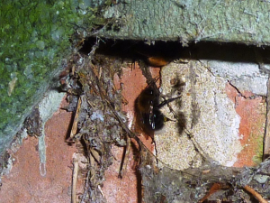Tree Bee nest