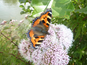 Butterfly by the Thames