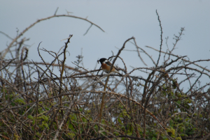 Bird in bush