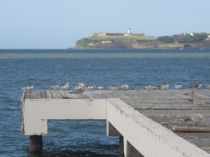 A view from El Morro and birds
