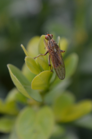 Unidentified fly 3