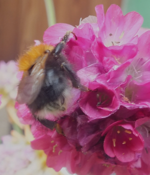 tree bee on thrift