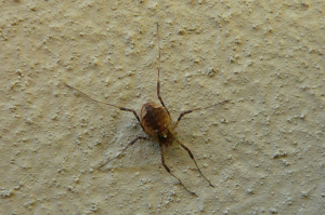 Insect on wall