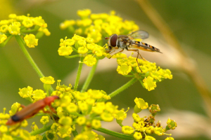 IHoverfly