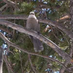 Bird in Rocky Mountains