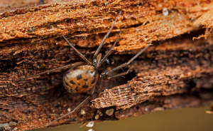 Spider in Leaf-Litter