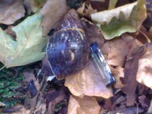 Large snail in Hackney